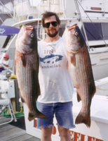 A couple of monster stripers I caught off Montauk Point, NY in the 70's with good friend Mike Laden - Master of the Bass